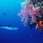Proibição da pesca de tubarões de profundidade - o caso da «gata» na Madeira