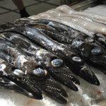 Economia da Madeira pode perder 2,3 milhões de Euros com redução da pesca do peixe-espada-preto